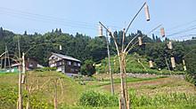 Hachi17